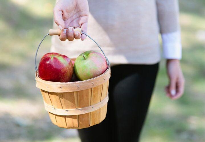 Apple-Picking-1